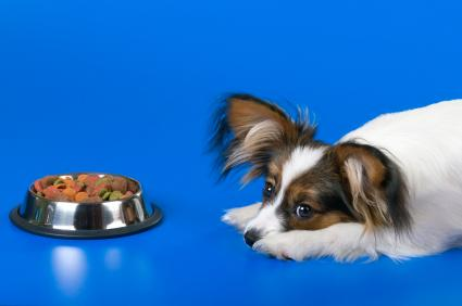 Inappetence – when your dog just won't eat a thing
