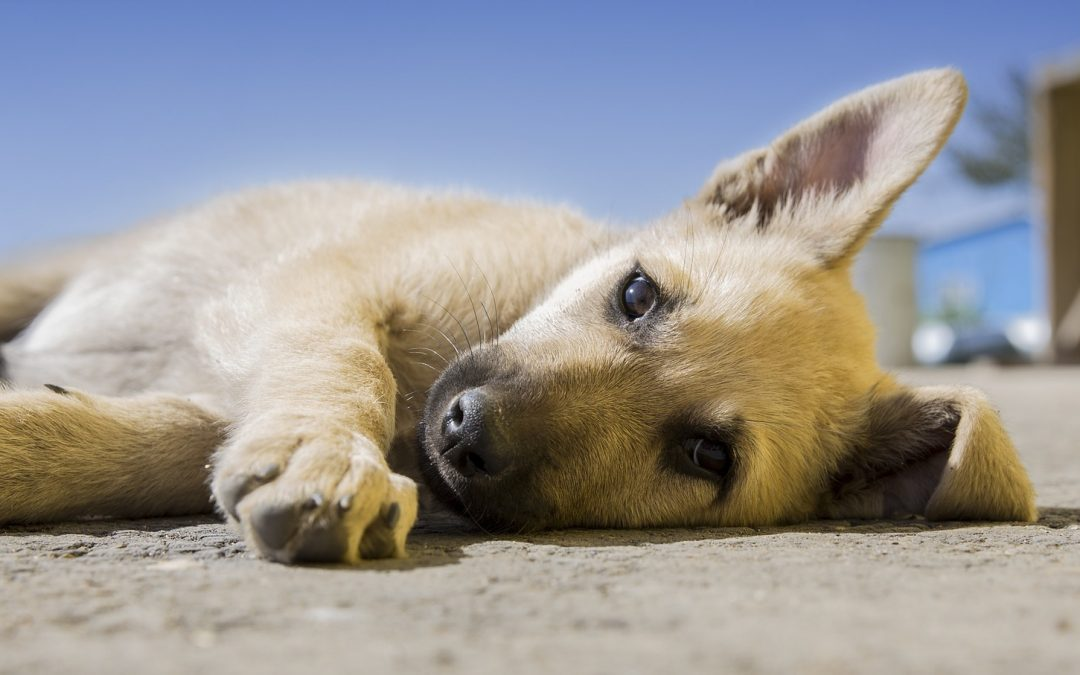 Vegetables for dogs – to feed, or not to feed?