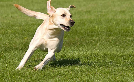 The Canine Immune System – 101