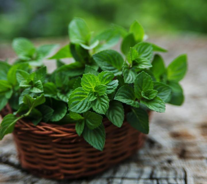 "Five Top Reasons that ""Herbs Don't Work"""